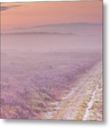 Path Through Blooming Heather Near Hilversum, The Netherlands Metal Print