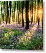 Path Through Bluebell Woods Metal Print