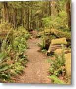 Path Through Mossy Forest Metal Print