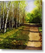 Path Through Silver Birches Metal Print