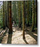 Path Through The Woods. Metal Print