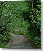 Path To Adventure Metal Print