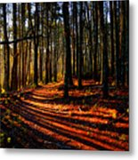 Path To Serenity - Nickerson State Park Metal Print