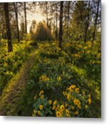 Path To The Golden Light Metal Print