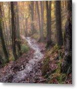 Path Trough The Woods Metal Print