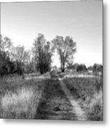 Path Yet Taken Metal Print