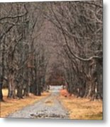 Pathway Through The Trees Metal Print