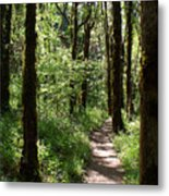 Pathway Through The Woods Metal Print