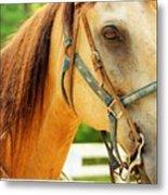 Patient Horse Metal Print