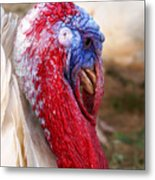 Patriotic Turkey Metal Print