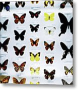 Pattern Made Out Of Many Different Butterfly Species Metal Print