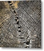 Pattern On An Old Stump Metal Print