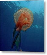 Patterned Luminescent Jellyfish Metal Print by Sami Sarkis