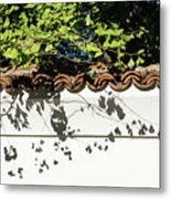 Patterned Sunshine - Ginkgo Shadows On A White Stucco Wall Metal Print
