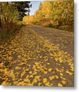 Paved In Gold Metal Print