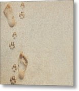 Paw And Footprints 2 Metal Print