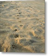 Paw Prints In The Sand Metal Print