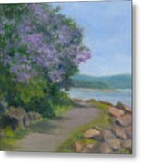 Paulownia Along The Nyack Trail Metal Print