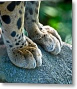 Paws For Effect Metal Print