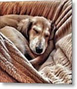 Peace At Last #saluki Metal Print