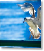 Peace Gull Metal Print