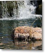 Peace In The Park Metal Print