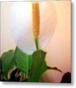 Peace Lily Luminous Metal Print