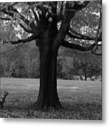 Peaceful Park Metal Print