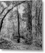 Peaceful Trees Metal Print