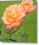 Peach And Gold Roses Metal Print