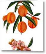 Peach And Peach Blossoms Metal Print
