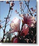 Peach Blossom Metal Print