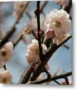 Peach Blossoms In Spring Metal Print
