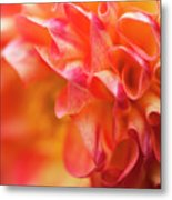 Peach Color Dahlia Metal Print