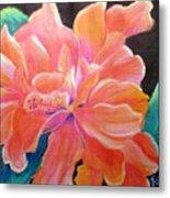 Peach Double Hibiscus Metal Print