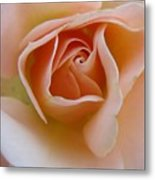 Peach Mini Rose Metal Print