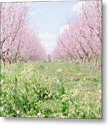 Peach Orchard 4 Metal Print
