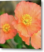 Peach Poppies Metal Print