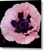 Peach Poppy - Cutout Metal Print