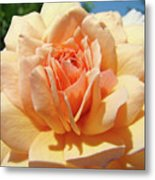 Peach Rose Art Prints Roses Flowers Giclee Prints Baslee Troutman Metal Print
