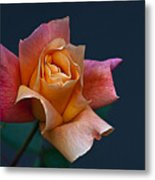 Peach Rose Bud Metal Print