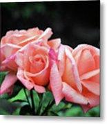 Peach Rosebud Trio Metal Print