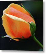Peach Splendour Metal Print