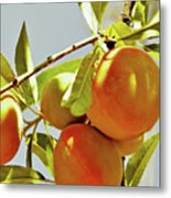 Peaches On The Tree Metal Print