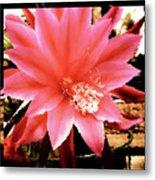 Peachy Pink Cactus Orchid Metal Print