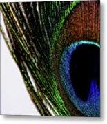 Peacock 7 Metal Print