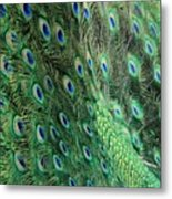 Peacock Feather Pattern Metal Print