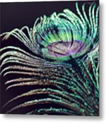 Peacock Feather With Dark Background Metal Print