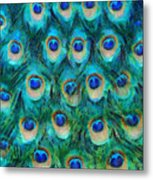 Peacock Feathers Metal Print