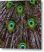 Peacock Feathers Upside Down Metal Print